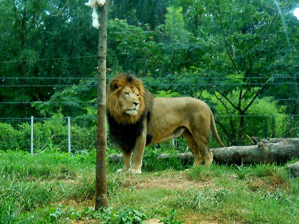 Zoo2010_016