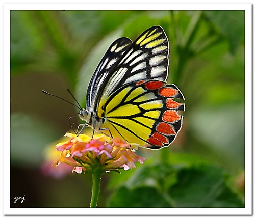 Imperfect Perfection by Yogendra174, on Flickr