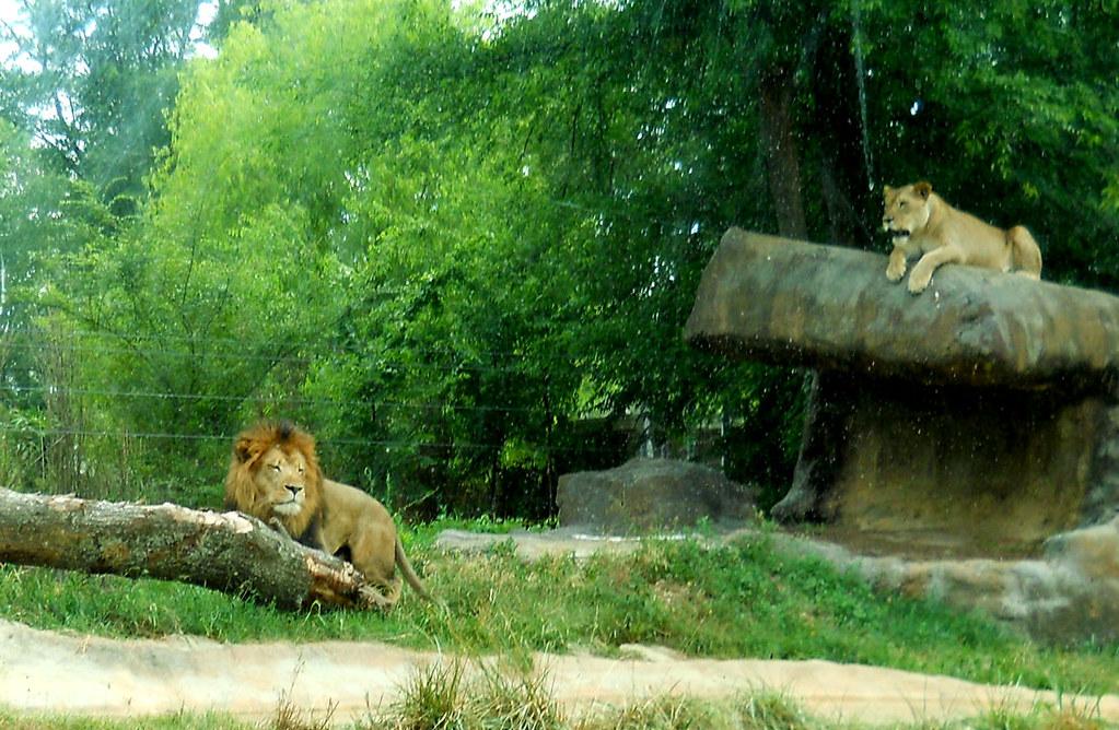 Zoo2010_017