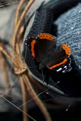 Butterflies and Hiking Boots