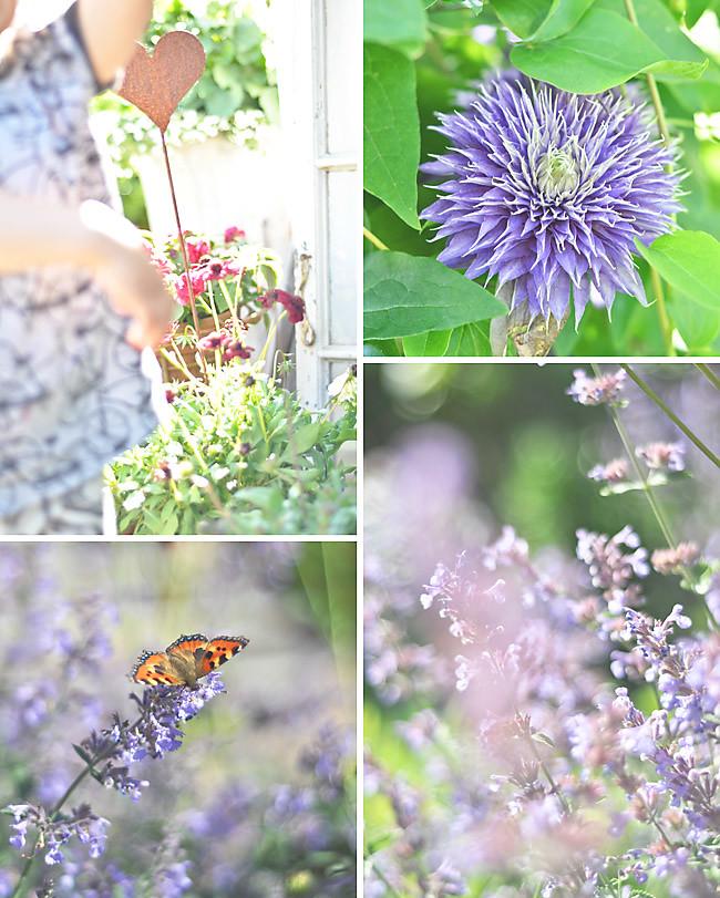 lila örtagård