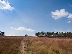 Imagen 03 (cguevara_aguilar) Tags: cielo árbol nube ‡rbol rbol cerrozapotecas