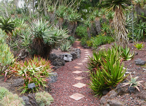 The path through the Aloe garden