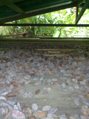 Donde se seca el cacao