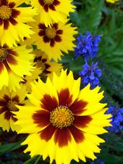Flowers_610c