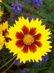 Flowers_610d