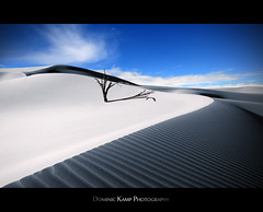 The Lonely Dune (Dominic Kamp) Tags: old blue red sky white hot tree sahara contrast dark dead high sand quiet dune violet deep heat infrared lonely ultra infra wandering dominic kamp sere lonesome