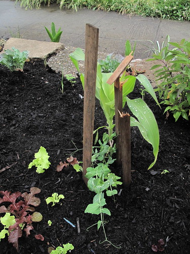 operation neighbors garden