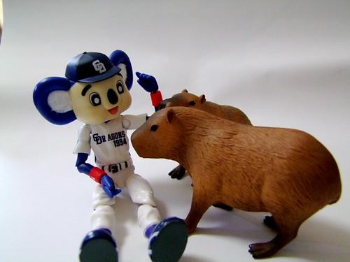 カピとドアラ/Capybara and Doala