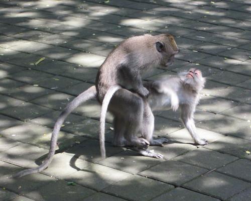 Monkey Forest (19)