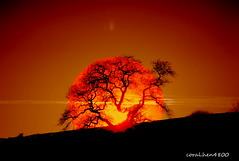 DSCF0031 (coral.hen4800) Tags: wood trees sunset sky sun moon tree set clouds sunrise woods rays rise sunrays wow1 wow2 wow3 wow4 thegalaxy wow5 wowhalloffame magicofnature bestcapturesaoi elitegalleryaoi mygearandmepremium mygearandmebronze tplringexcellence wowfameofhall