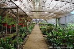 Puentespina Orchid Garden Farm Davao