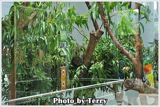動物園 - (6)