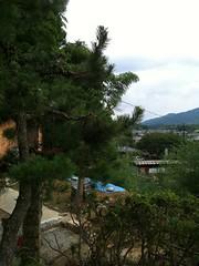 IMG_0998 (max.takaki) Tags: summer green japan sommer july agriculture  nara  asuka