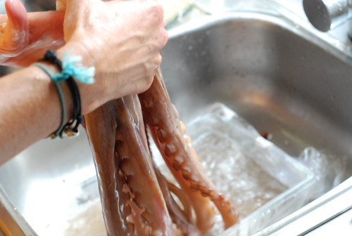 washing octopus
