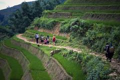 Sur le chemin des rizières