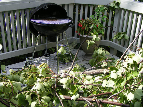Tree Fell On Our Deck