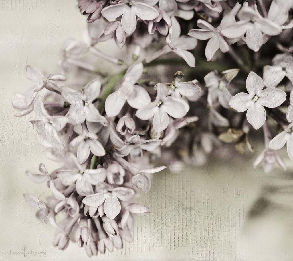 texture lovin' lilacs....