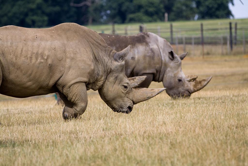 Rhino Safari Photography Workshop - Improve your photographic skills