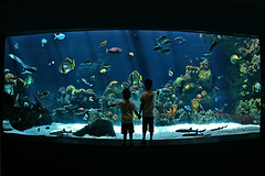 minnesota zoo aquarium underwater (Dan Anderson.) Tags: ocean life sea