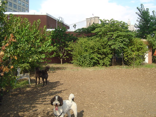 Brooklyn Bridge Park - Dog Run
