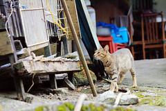 IMG_0476 () Tags:  taiwan  taipei  taipeicounty  rueifangtownship   houtong  catvillage  houtongcatstreet