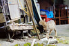IMG_0476 (翔志) Tags: 台灣 taiwan 台北 taipei 台北縣 taipeicounty 瑞芳鎮 rueifangtownship 侯硐 猴硐 houtong 貓村 catvillage 百貓街 houtongcatstreet 貓