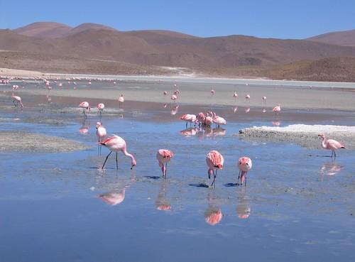 Uyuni - San Pedro de Atacama, Bolivia, Chile