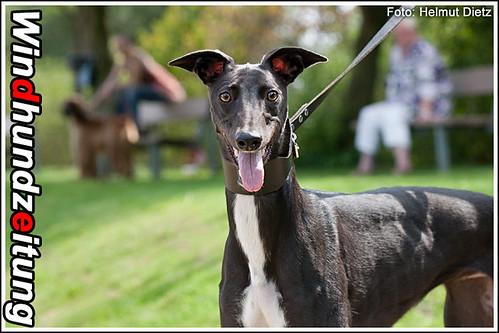 Greyhound Z-Eagle Horizon