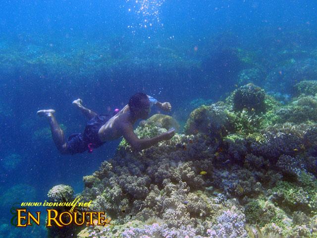 Underwater at Pamilacan Island Bohol