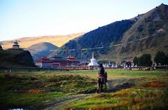 Lhagang is a Tibetan style town and has a warm atmosphere. (reurinkjan) Tags: prayerflag lungta tibetanlandscape     janreurink ommanipemehung tibetanplateaubtogang kham buddhism 2009 tibet sacredmountainsoftibet dardocounty lhagong zharalhatse5820m19094ft lhaganggompa minyaglhagangyongdzograbgilhakangtongdrolsamdribling chortenmchodrten nyingmapasherda prayerflagsonstaff