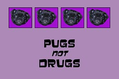 PPP Pugs Not Drugs
