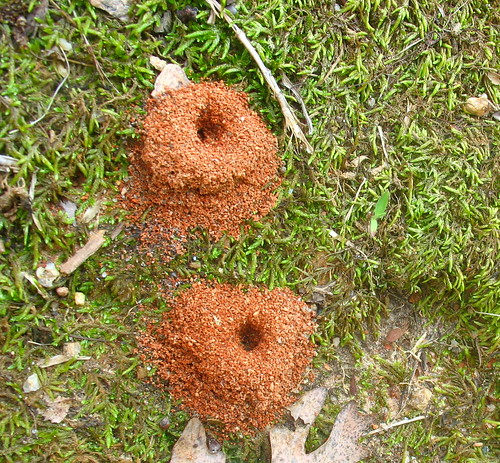 nature notes anthill IMG_2820