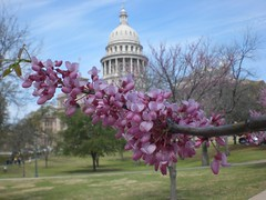 flower & capital building