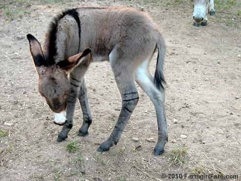 Baby Donkey 4
