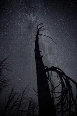 Reach for the sky you scum (Squid Vicious) Tags: tree oregon stars fire milkyway cloudcap
