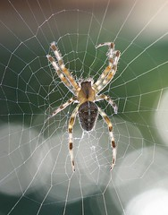 Spider close up (Wilamoyo) Tags: light colour macro up insect spider close