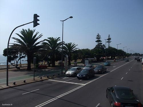 Des palmiers bordent les avenues du Brésil et de Montevideo