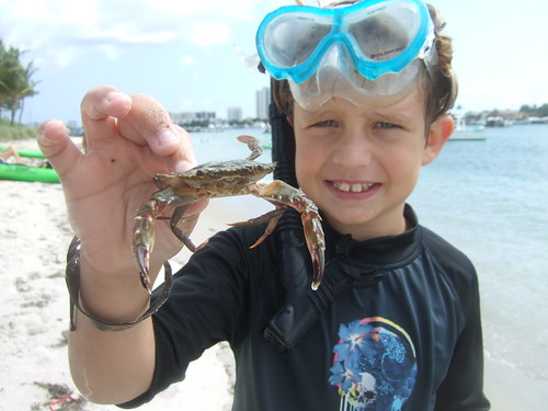 Christopher catches a swimming crab