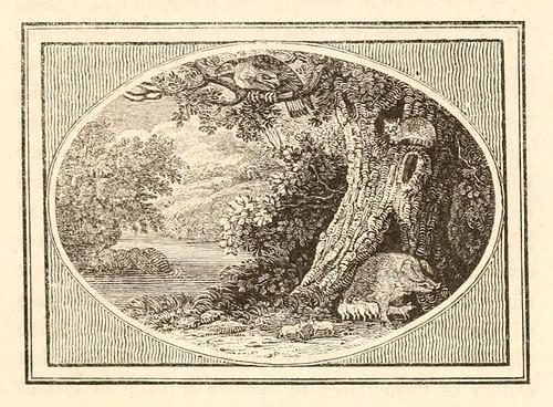 Aquila, Feles et Aper