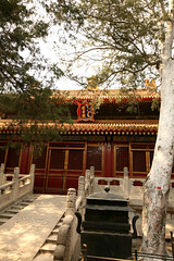 Imperial Gardens 33 (David OMalley) Tags: china city red beauty architecture capital chinese beijing palace forbidden empire imperial  forbiddencity dynasty emperor  grandeur  verbotenestadt citinterdite    verbodenstad cidadeproibida cittproibita yasakehir chineseempire    ipinagbabawalnalungsod cmthnhph
