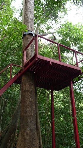 Koh Samui Canopy Adventures サムイ島キャノピーアドベンチャー3