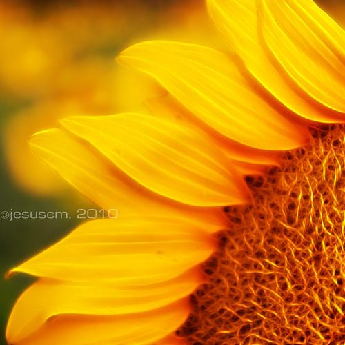 sun's energy • energía del sol