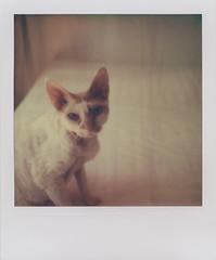 vlad (sdzn) Tags: cat polaroid sdzn rexdevon