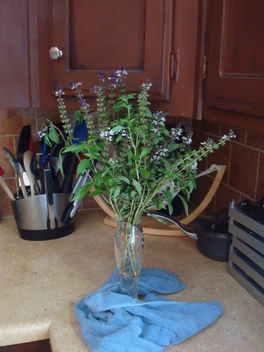 331/365 Blooming