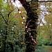 lampion et forêt