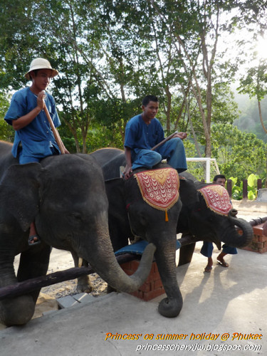 Elephant Trekking & Safari 22