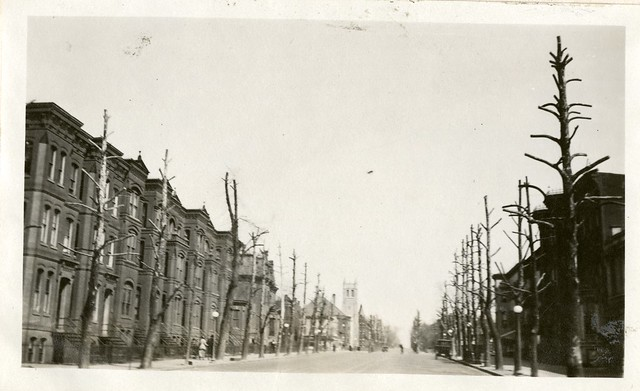 Washington, DC, Tree-lined Street, 1919, by Martin A. Gruber, Black-and-white photographic print, Sm