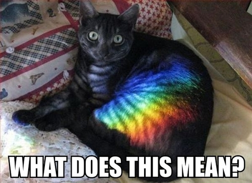 raincatbow