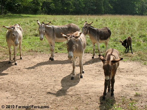 Donkey Group Shot 2